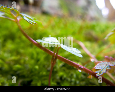 new seedlings growing though the undergrowth in spring - Stock Photo