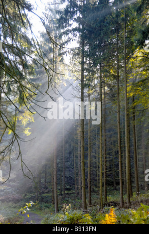 Rays of early morning sunlight streaming through spruces in Karlsbrunn Germany - Stock Photo