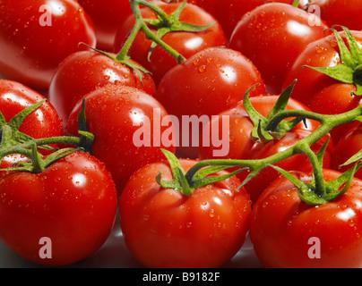 Fresh vine ripened tomatoes - Stock Photo