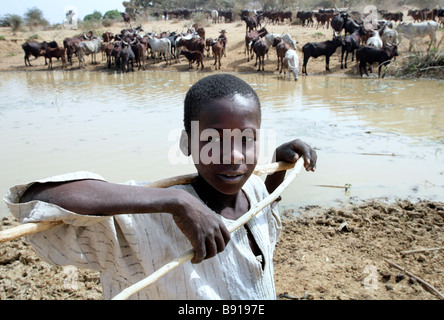 Nigeria: young herdsman with his animals at a watering place - Stock Photo