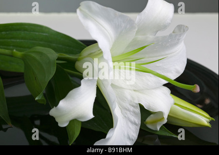 A beautiful Easter lily in an elegant table setting on a black plate. - Stock Photo