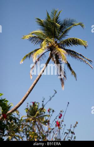 Coconut palm over blue sky. - Stock Photo