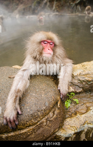 Japanese Macaque snow monkey at Jigokudani Monkey Park Nagano Japan - Stock Photo