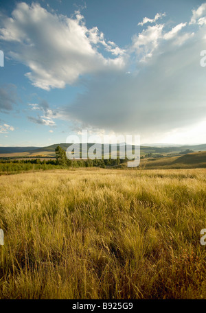 Scenic view of grass fields in the Natal Midlands KwaZulu Natal Province South Africa - Stock Photo