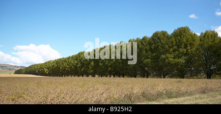 Row of trees along a farm drive way in the Natal Midlands KwaZulu Natal Province South Africa - Stock Photo