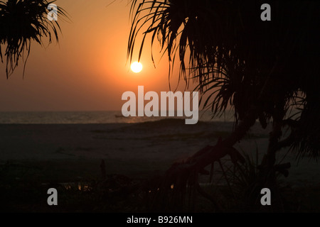 Sunset over ocean through palm leafes. - Stock Photo