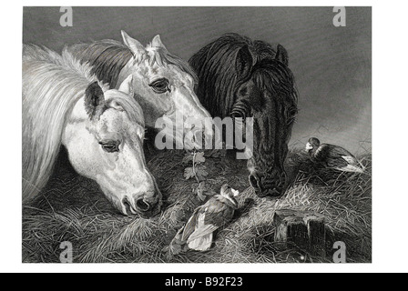 the Scanty Meal John F. Herring scene artists 1795 1865 Horse Stable Hay - Stock Photo