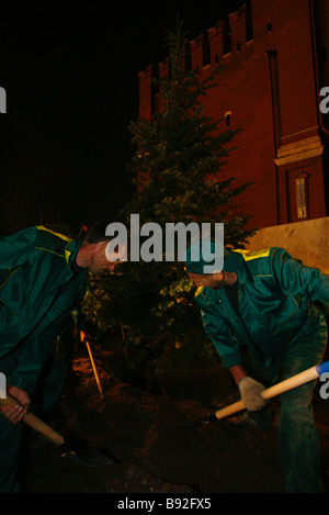 Work starting at the Kremlin wall to replace the famous blue spruces It is scheduled to plant 73 new trees - Stock Photo