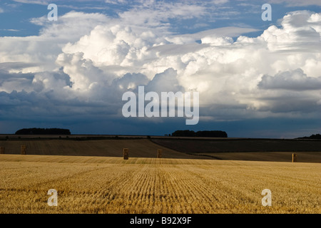 Bales of Straw in Wheat Field After Harvest, near South Dalton, East Yorkshire, England, UK - Stock Photo