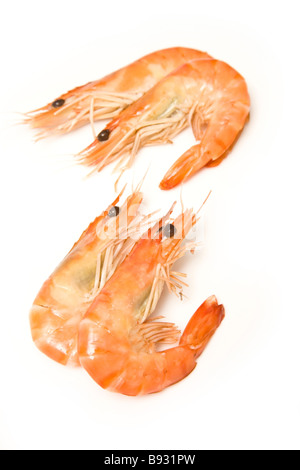Crevettes cooked prawns shrimp isolated on a white studio background - Stock Photo