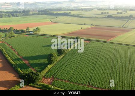 Farm fields with single monoculture crops in mid devon - Stock Photo