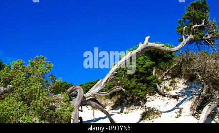 Trunks in a white sand beach. Sassari Province. Sardegna. Italia - Stock Photo