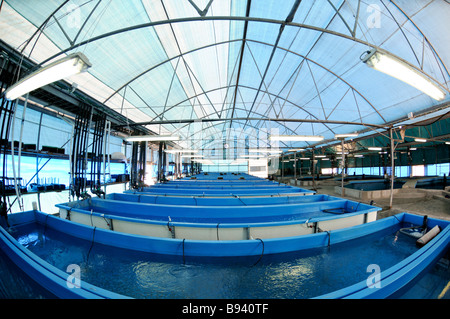 Cool Indoor Pools With Fish cool indoor pools with fish the waves of this water largest surf