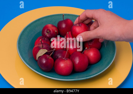 Hand picking up a ripe crab apple from a bowl of crab apples - Stock Photo