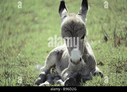 Tajik donkey - Stock Photo