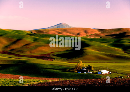 Dawn view from Kamiak Butte, looking at Steptoe Butte, Washington State Palouse region of wheat and canola farming. - Stock Photo