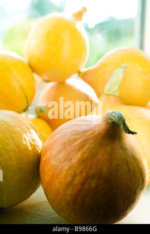 Winter squash (Cucurbita maxima) - Stock Photo