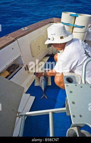Big game fishing preparing bonito lure on fishing boat Saint Gilles La Réunion France   Hochseeangler präpariert - Stock Photo
