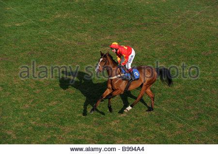 A horse and jockey at Ludlow Racecourse Shropshire uk - Stock Photo