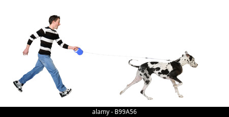Man walking his dog Great Dane 4 years in front of a white background - Stock Photo