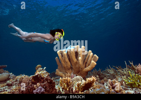 White girl in a bikini snorkelling underwater looking at coral and a blue starfish at Maratua Reef in the Celebes - Stock Photo