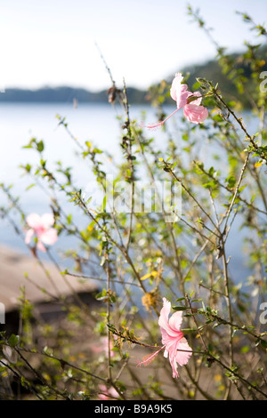 Blossoms on an island in the Solentiname archipelago in Lake Nicaragua. - Stock Photo