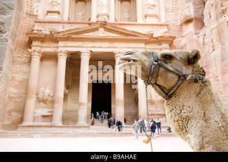 A camel in front of the Treasury, Petra Jordan - Stock Photo