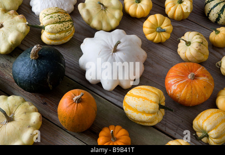 SQUASHES ON TABLE - Stock Photo