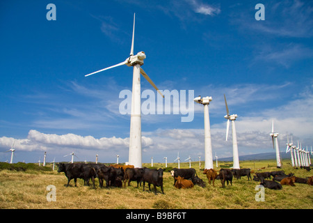 Windmills and cattle near South Point - Big Island, Hawaii, USA - Stock Photo