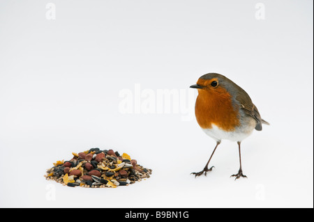 Robin and wild bird seed on white background - Stock Photo