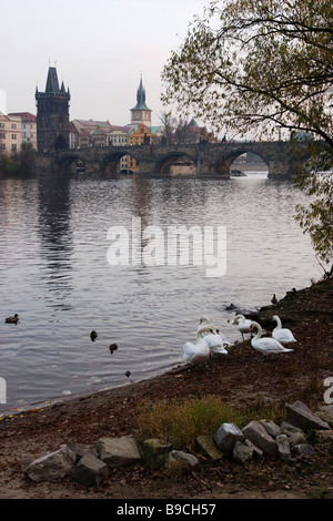 View on Charles bridge with swans on foreground.  Prague. - Stock Photo