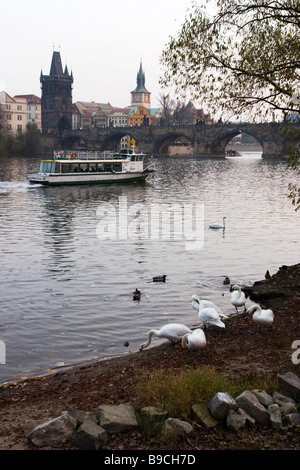 View on Charles bridge and Vltava river with tourist boat with swans on foreground.  Prague. - Stock Photo