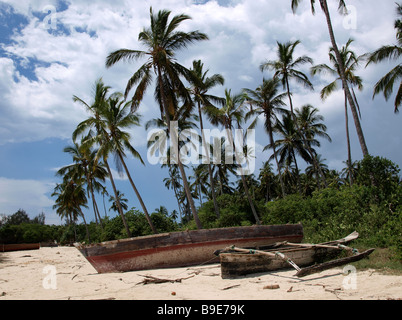 ngalawas local fishing boats (often wrongly called dhows) beached beneath palm trees off Zanzibar - Stock Photo
