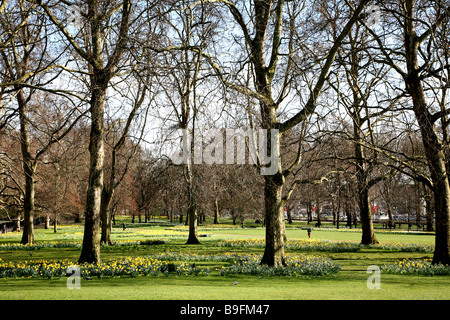 Spring blooms in St James's Park, London - Stock Photo
