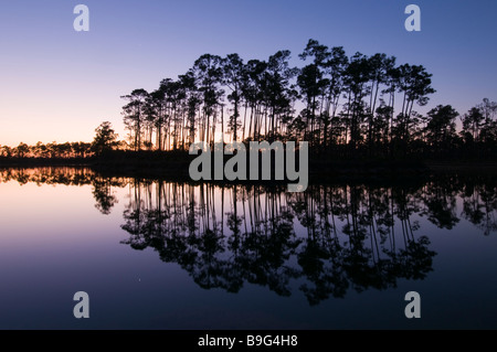Slash pine forest reflects in lake at sunset in Long Pine Key area Everglades National Park Florida - Stock Photo