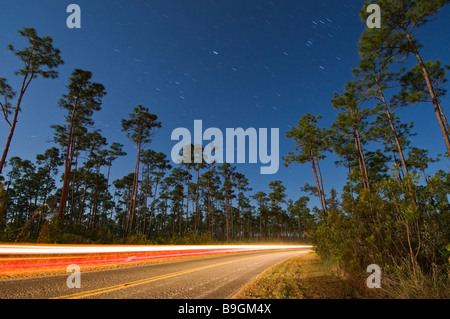 Time exposure under full moon captures car and star trails above forest Everglades National Park Florida - Stock Photo