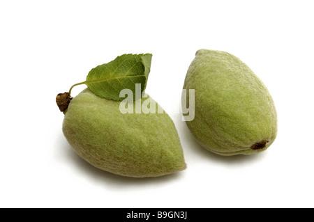 Fresh Almonds Prunus Dulcis Stockfoto Lizenzfreies Bild