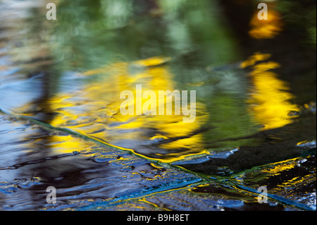 Water on garden paving slabs with reflections of daffodil flowers abstract - Stock Photo