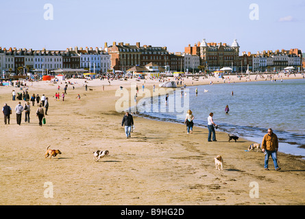 People walking their dogs on Weymouth beach. Dorset. UK. Holiday resort hotels and guest houses in the background. - Stock Photo