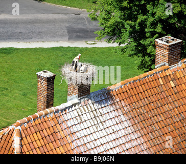 White Stork (Ciconia ciconia) with young, stork nest on a chimney, roof - Stock Photo