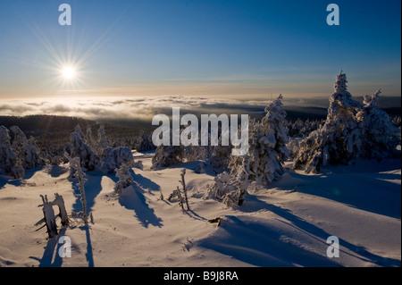 Backlit snow-covered spruce trees, Brocken, Blocksberg, Harz National Park, Saxony-Anhalt, Germany, Europe - Stock Photo