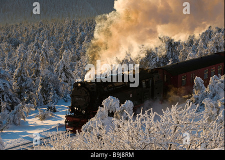 Harz narrow-gauge railroad in a wintery forest, steam engine, Brocken, Blocksberg, Harz National Park, Saxony-Anhalt, - Stock Photo