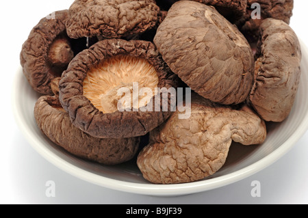 Shiitake Lentinula edodes is an edible mushroom native to Asia used as food and medicinal plant - Stock Photo