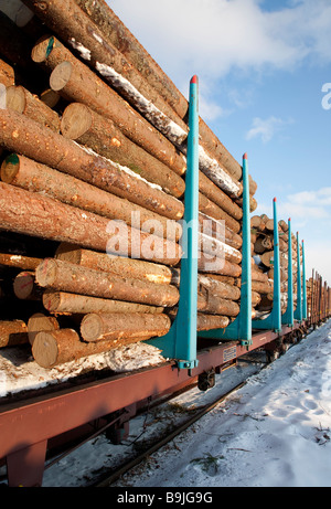 Spruce  ( picea abies )  logs on log train loaded into flatcars with stakes , Finland - Stock Photo