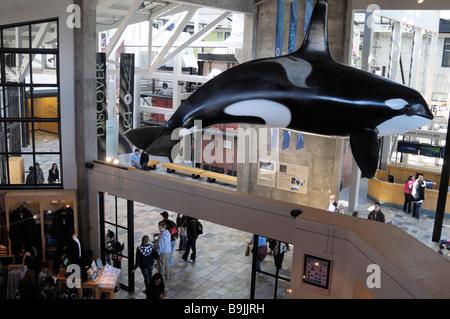 Interior of the Monterey Bay Aquarium, California USA - a lifesize model of an Orca 'killer' whale. - Stock Photo