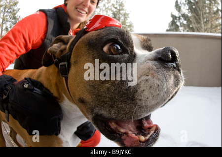 Close up of a young woman and a boxer dog wearing goggles in the snow. - Stock Photo