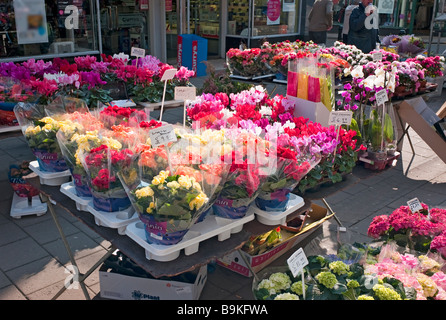 Market stall selling plants and flowers in Devizes in March in advance of Mothers Day - Stock Photo