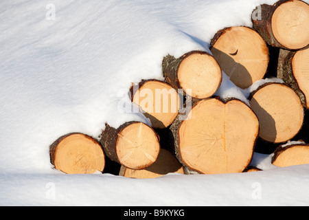 Pile of spruce  ( picea abies )  logs underneath snow - Stock Photo