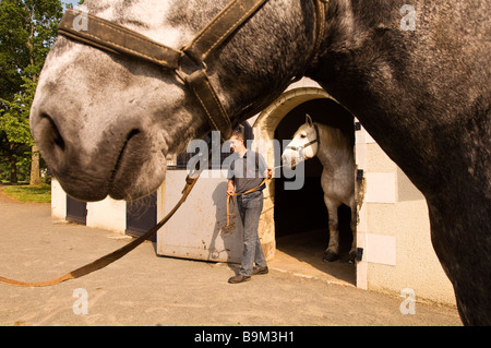 France, Maine et Loire, Haras National du Lion d' Angers (Le Lion d' Angers National Stud Farm) - Stock Photo