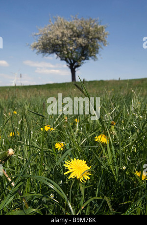 Tree on a meadow - Stock Photo
